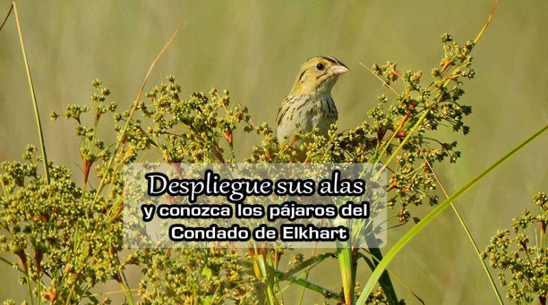 Despliegue sus alas y conozca los pájaros del Condado de Elkhart